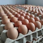 """โครงการ """"ไข่ไก่ธงฟ้า ลดราคา ช่วยประชาชน ลดภาระค่าครองชีพ"""" ระหว่างวันที่ 10-14 กุมภาพันธ์ 2564"""